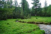 Вековните гори на Пирин